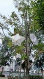 Star paper lantern Royalty Free Stock Image