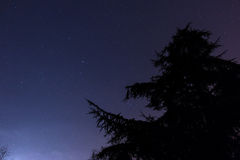 Star and Pine Silhouette. Pine Silhouette in Starry Night Cambridge Royalty Free Stock Photos