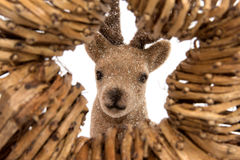 Star with reindeer Royalty Free Stock Photo