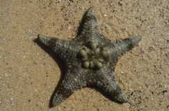Star on the sand royalty free stock photo