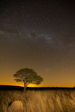 Star scape with lone tree brown grass and Milky Way and soft lig Stock Photo
