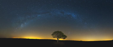 Star scape with lone tree brown grass and Milky Way and soft lig Royalty Free Stock Photos