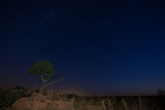Star scape with lone tree brown grass and Milky Way soft light Stock Photo