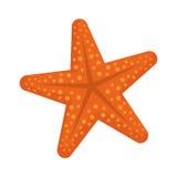 Star sea creature. Icon  illustration graphic design Stock Image