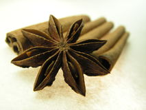 Star seed and bark spices. Spices; they bring out the flavor in dishes.Fructus anisis stellati of Illicium verum ( scientific version ), star anise is the seed Stock Photography