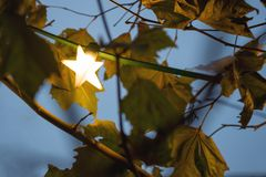 Star shape Christmas lighting between leafs Stock Photography