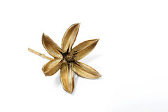 Star-shaped семена. стоковое фото
