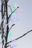 Star shaped christmas lights on bare twigs Stock Photos