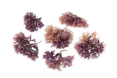 Star shaped moss seaweed. On white background Stock Photo