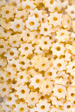 Star shaped pasta closeup Royalty Free Stock Photography