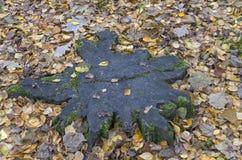 Star-shaped stump. Royalty Free Stock Photography
