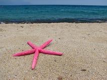 Star shell royalty free stock photo