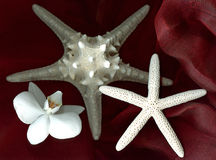 Star shell fish and orchid Royalty Free Stock Photos