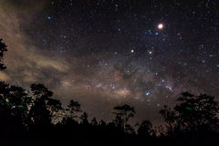 Star in the sky Night. In Pine forest Royalty Free Stock Photo