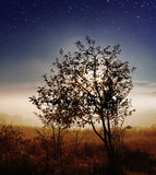 Star sky over countryside Royalty Free Stock Photos