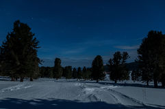 Star snow night sky cedars Royalty Free Stock Photography