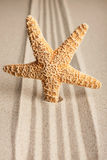 Star sticking out in the sand Royalty Free Stock Images