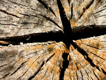 Star Stump. Cracked Stump in Awesome Design stock image