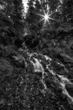 The Star Sun BW. Slow motion waterfall in the Wasatch national forest in the early fall with the sun shining through the trees in Utah USA Stock Image