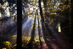 Star sunbeams in forest Stock Photo
