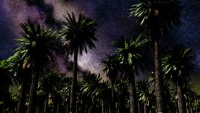 Star Time Lapse, Milky Way Galaxy Moving Across the Night Sky and Palms stock footage