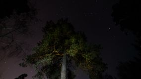 Star tracks in the sky around the tree. stock video footage