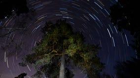 Star tracks in the sky around the tree. stock video