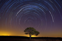 Star trail with lone tree brown grass and soft light Stock Images