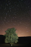 Star trails. Over a tree Royalty Free Stock Photography
