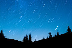 Star Trails. Over pine forest Stock Image