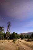 Star trails. Trees at night with star trails in the sky Stock Photo
