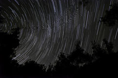 Star trails in the forest Royalty Free Stock Photo