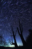 Star Trails(Husband and wife tree) Stock Images