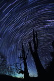 Star Trails(Husband and wife tree) Royalty Free Stock Photography
