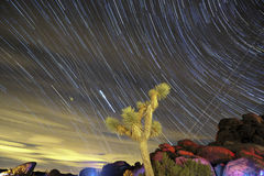 Star trails and Joshua tree in California. US Royalty Free Stock Photos