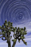 Star Trails Joshua Tree National Park Spring. North Star is circled by star trails at night in Joshua Tree National Park. There is a Joshua Tree in the Royalty Free Stock Photo