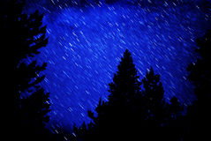 Star Trails in Night Sky. Star trails in blue night sky with pine trees silhouetted in front Stock Photos