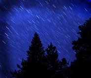Star Trails in Night Sky. Star trails in blue night sky with pine trees silhouetted in front Royalty Free Stock Image