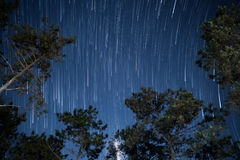 Star trails in the night sky with tree.  Stock Photography