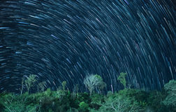 Star trails in the night sky with tree on mountain.  Royalty Free Stock Photos