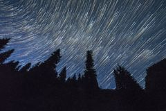 Star Trails over Coniferous Forest Royalty Free Stock Photo