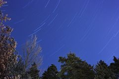 Star trails over a forest Royalty Free Stock Image