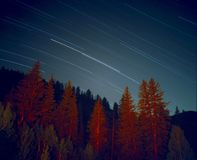 Star trails over forest Stock Images