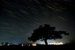 Star trails and a silhuette of a tree. Stock Photography