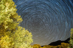 Star trails Startrails. Star trails over a trees Stock Photo