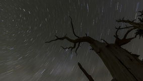 Star Trails Time Lapse. Star trails with dead tree time lapse image sequence stock video footage