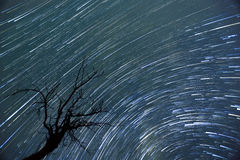 Star trails timelapse. A timelapse of the Milky way at August with a silhouette of a tree in front of it Stock Photography