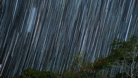 Star trails with tree in night sky.  Stock Images
