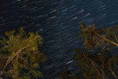Star trails with tree in the night sky.  Royalty Free Stock Images