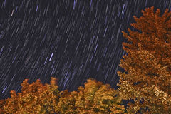 Star trails and trees.  Royalty Free Stock Image